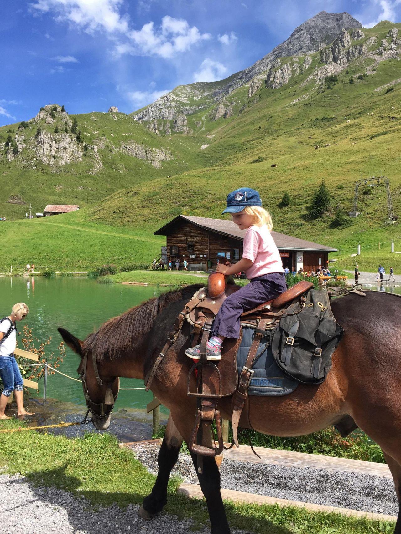 Mule trekking in Engelberg