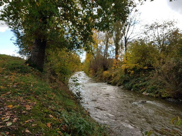 Weg am Wasser - Ein Bach lebt