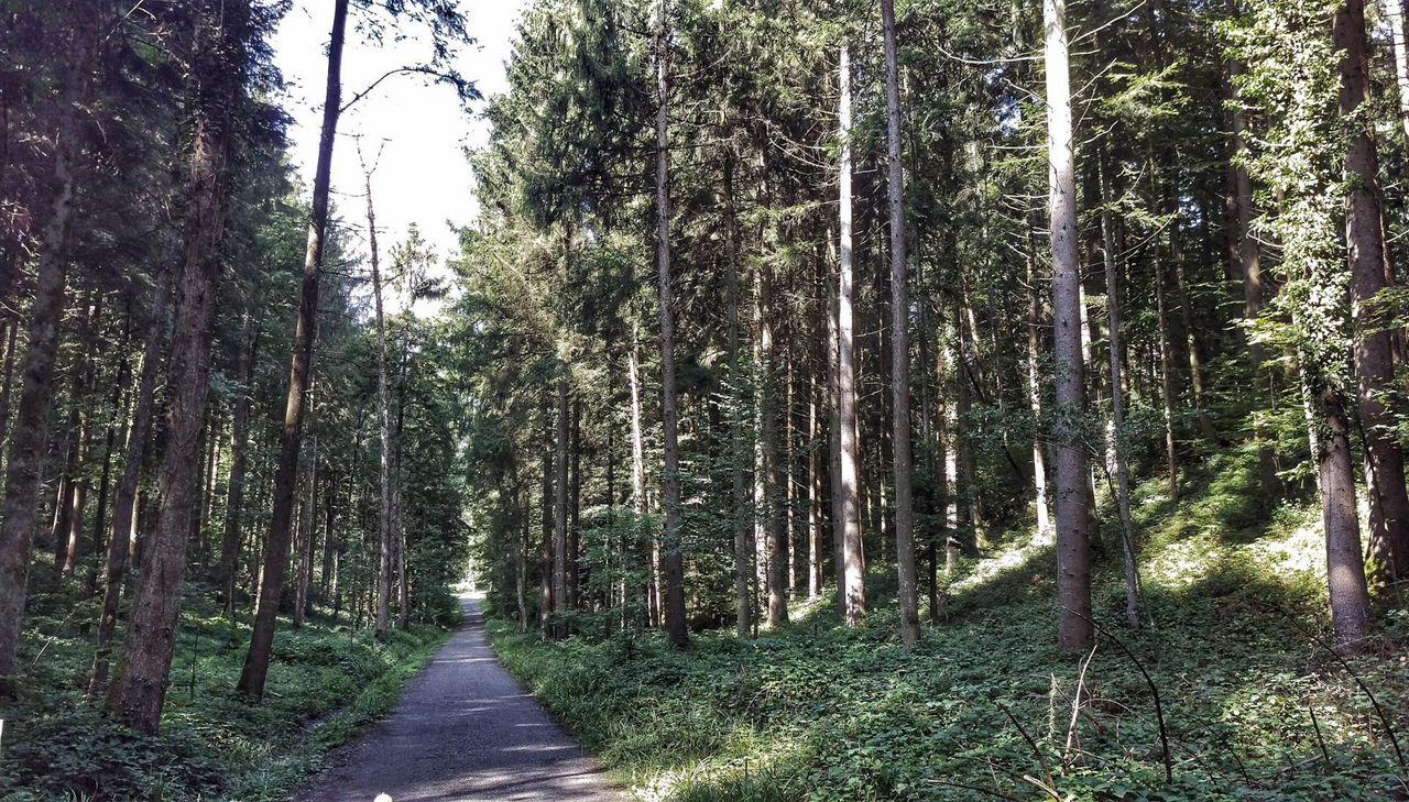 Gütsch Wood