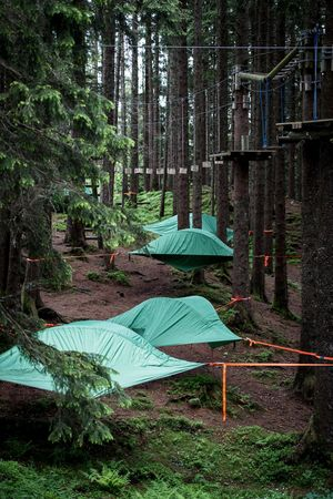 Tree tents on the Pilatus
