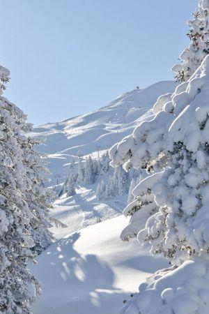 Stoos: Schneeschuhtour zur Alp Laui