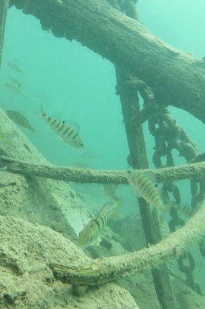 Diving in Lake Lucerne