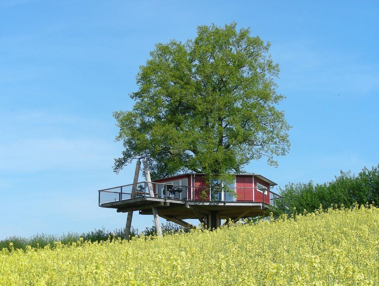 Tree House and Ark Farm