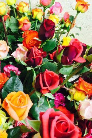 Weggis Roses