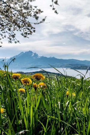 Zwischä See und hechä Bärgä, Weggis