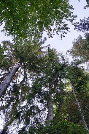 Bergwaldbaden im Hilfernthal