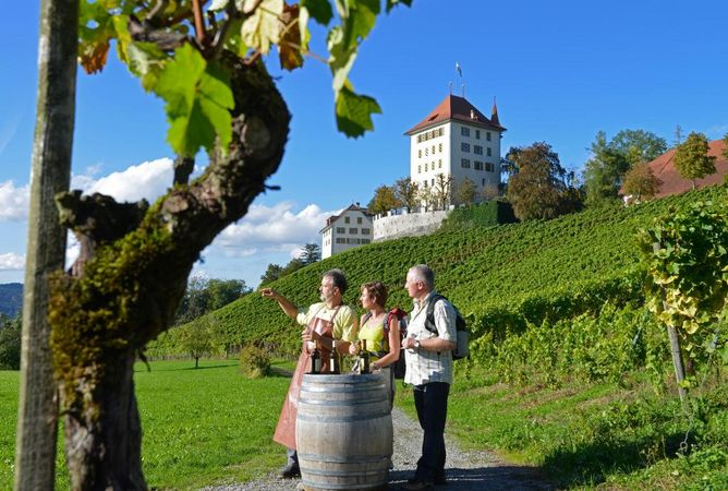 Seetal: hiking suggestion no. 15, Mosen – Aesch – Hitzkirch – Gelfingen, vineyard hike