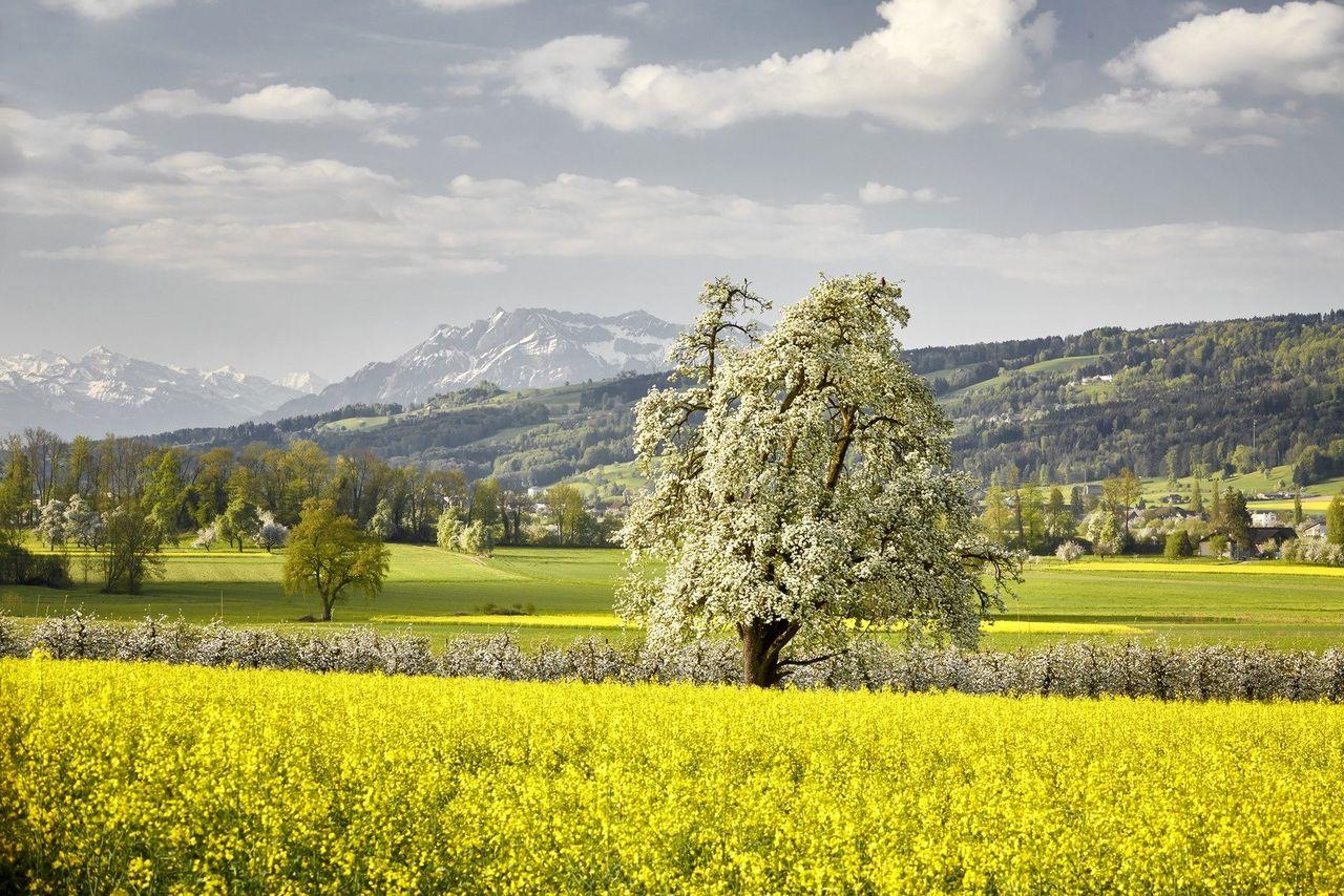 Dix suggestions pour votre séjour de Pâques à Lucerne