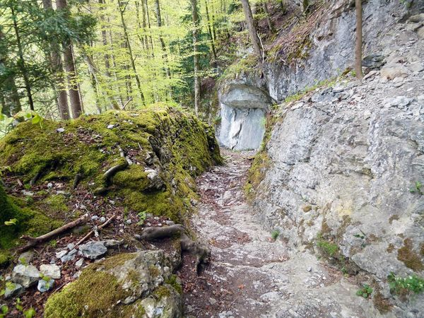 Archaeology theme trail - the old Brünig mule track