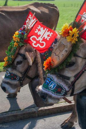 Alp herdsmen's fairs
