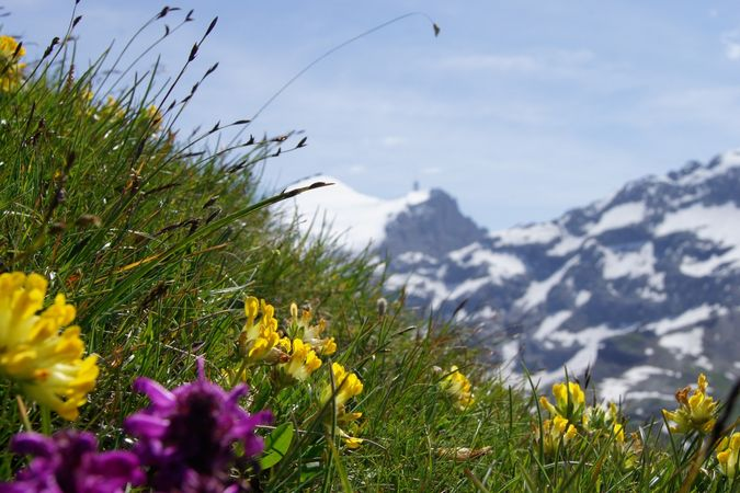 Bergblumenpfad Gerschnialp - Untertrübsee