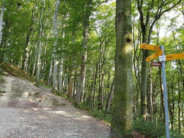 Randonnée familiale Gettnau - Willisau