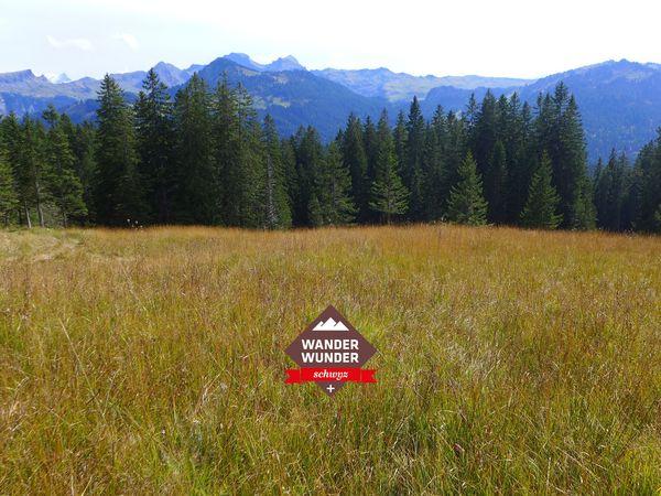 WanderWunderSchwyz: Ibergeregg bis Laucherenstöckli