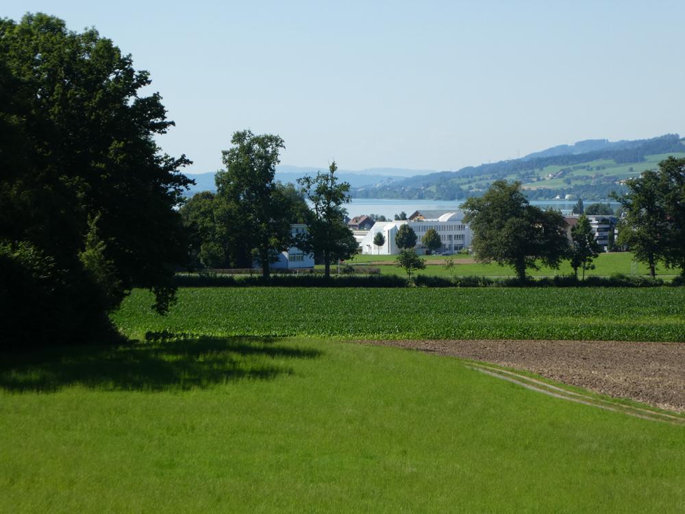 Wurzelbaumhaus - Swissfarm Wechsler