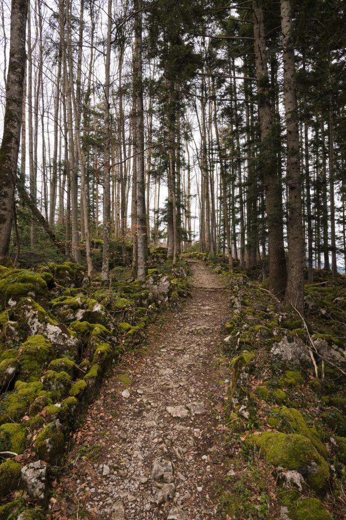 Auf dem Förster-Trail um Seelisberg