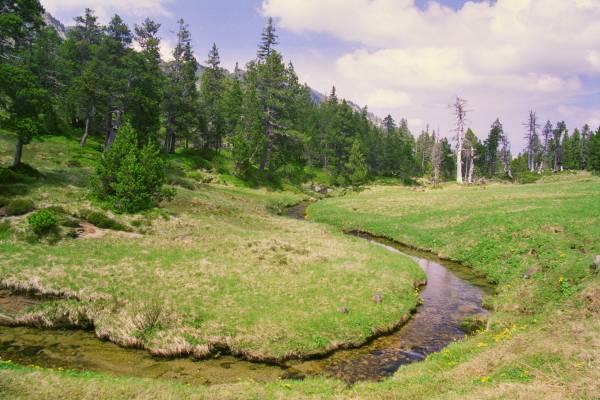 Moorlandschaftspfad: Moorlandschaft Glaubenberg (1)