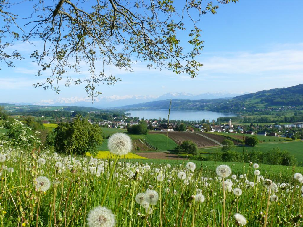 Seetal: MTB tour in the valley of castles and lakes
