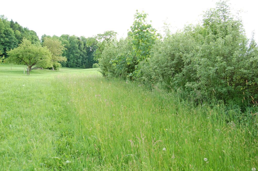 Rundweg Heckenlandschaft Feusisberg