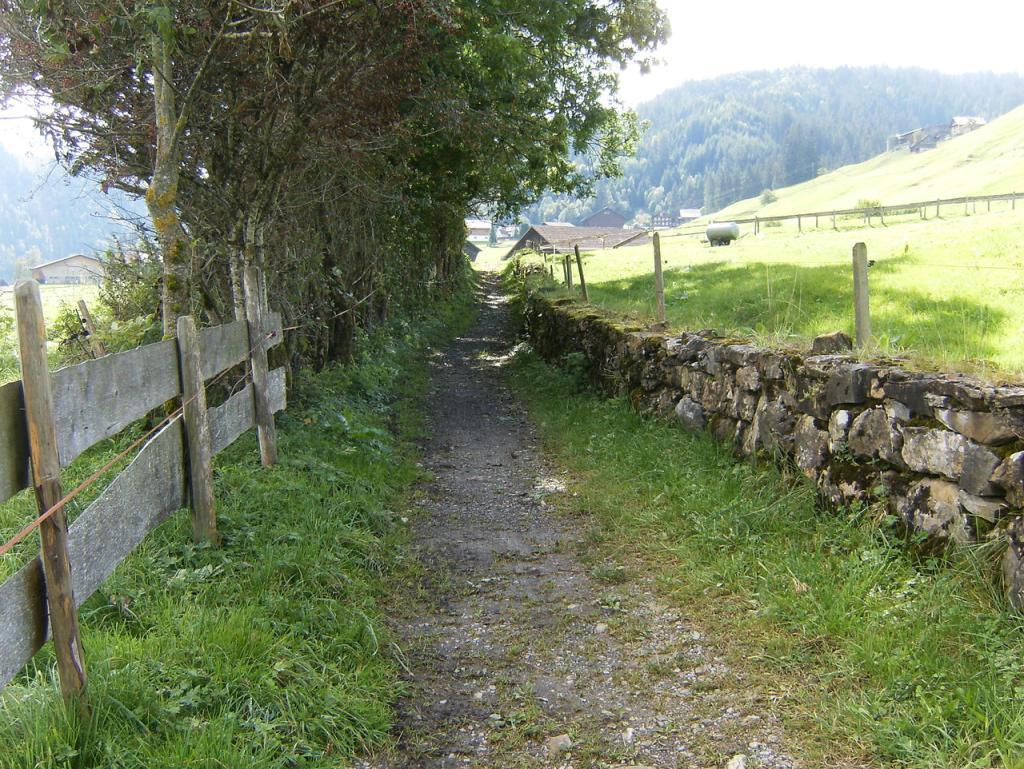 Nordic Walking im Ybrig