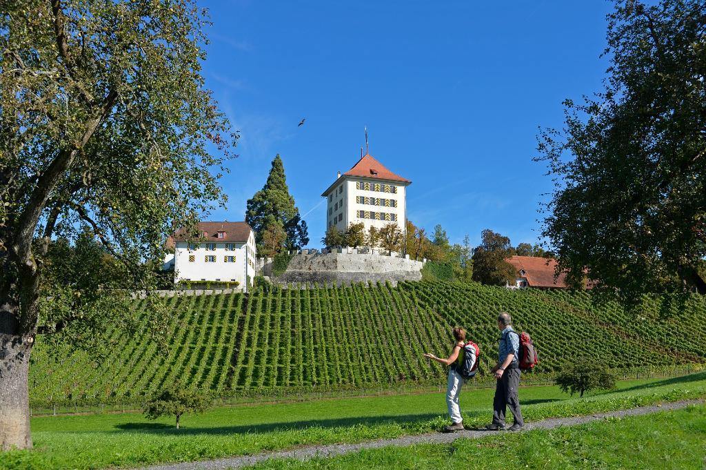 Seetal: hiking suggestion no. 15, Mosen – Aesch – Hitzkirch – Gelfingen, vineyard hike