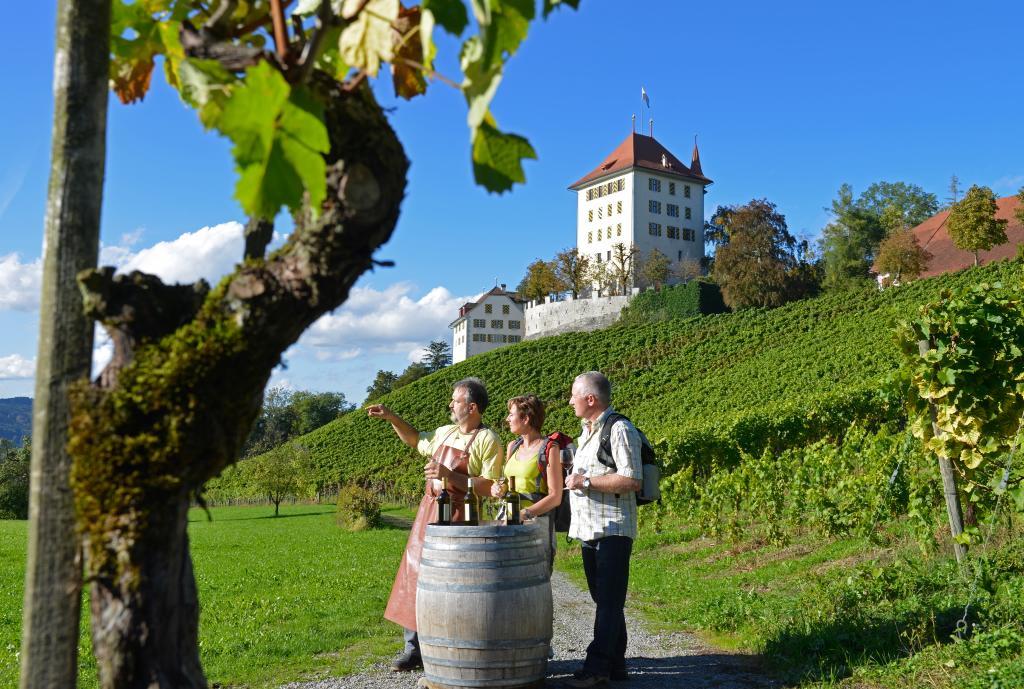 Mosen – Aesch – Hitzkirch – Gelfingen, Weingüterwanderung