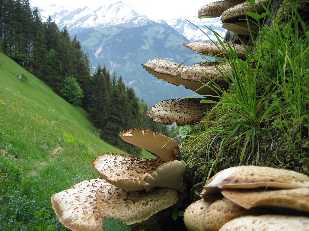 Höhenwanderung über dem Engelbergertal (Mehrtagestour)