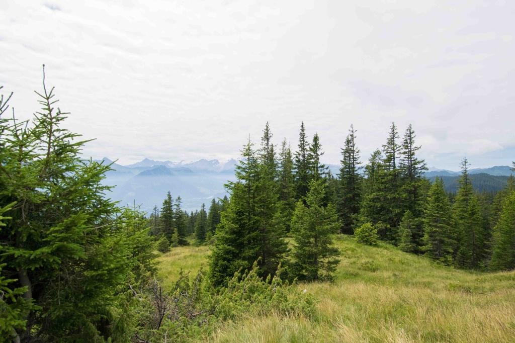 Jänzi Panorama Trail