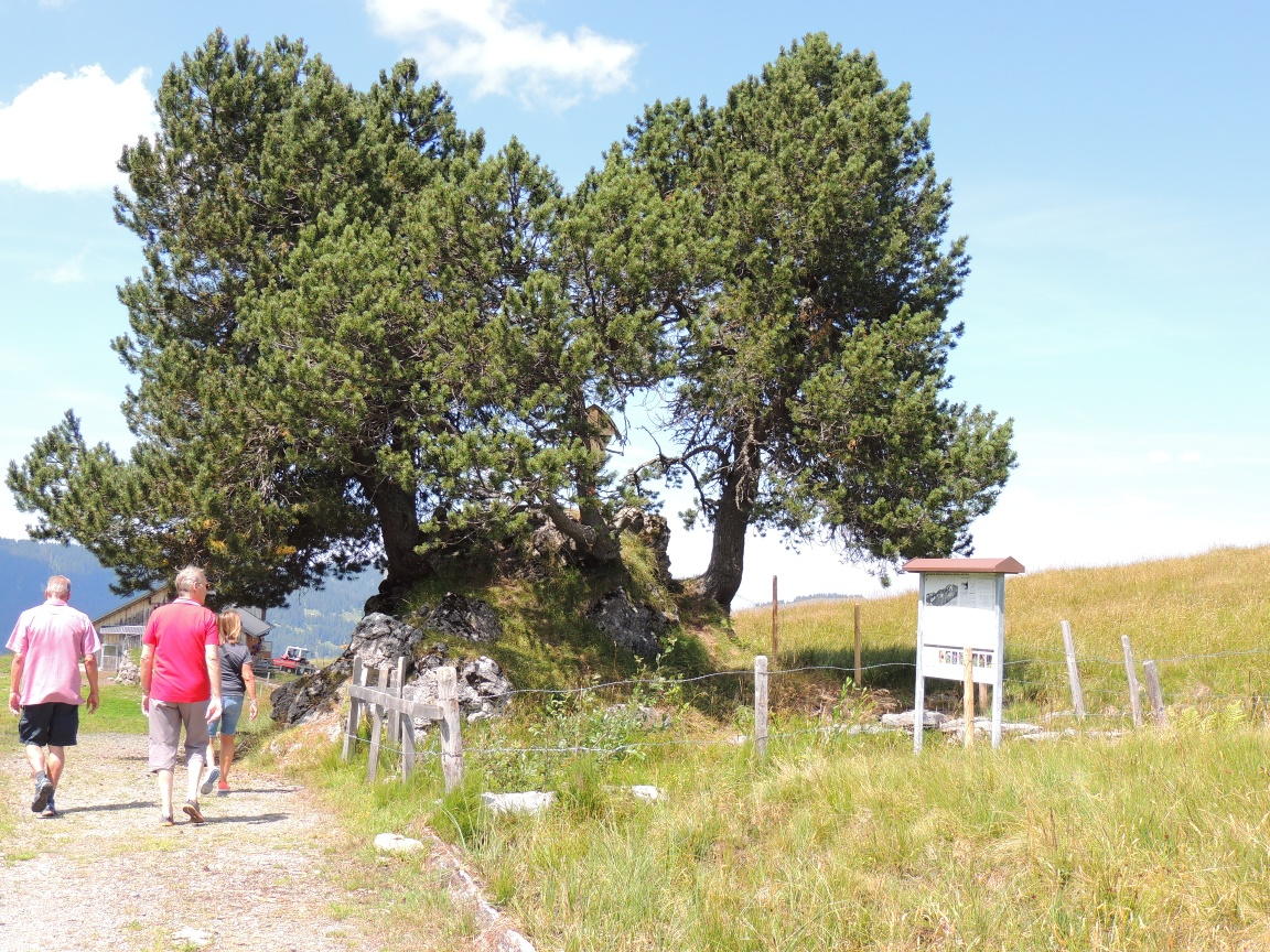 Around the Roggenstock