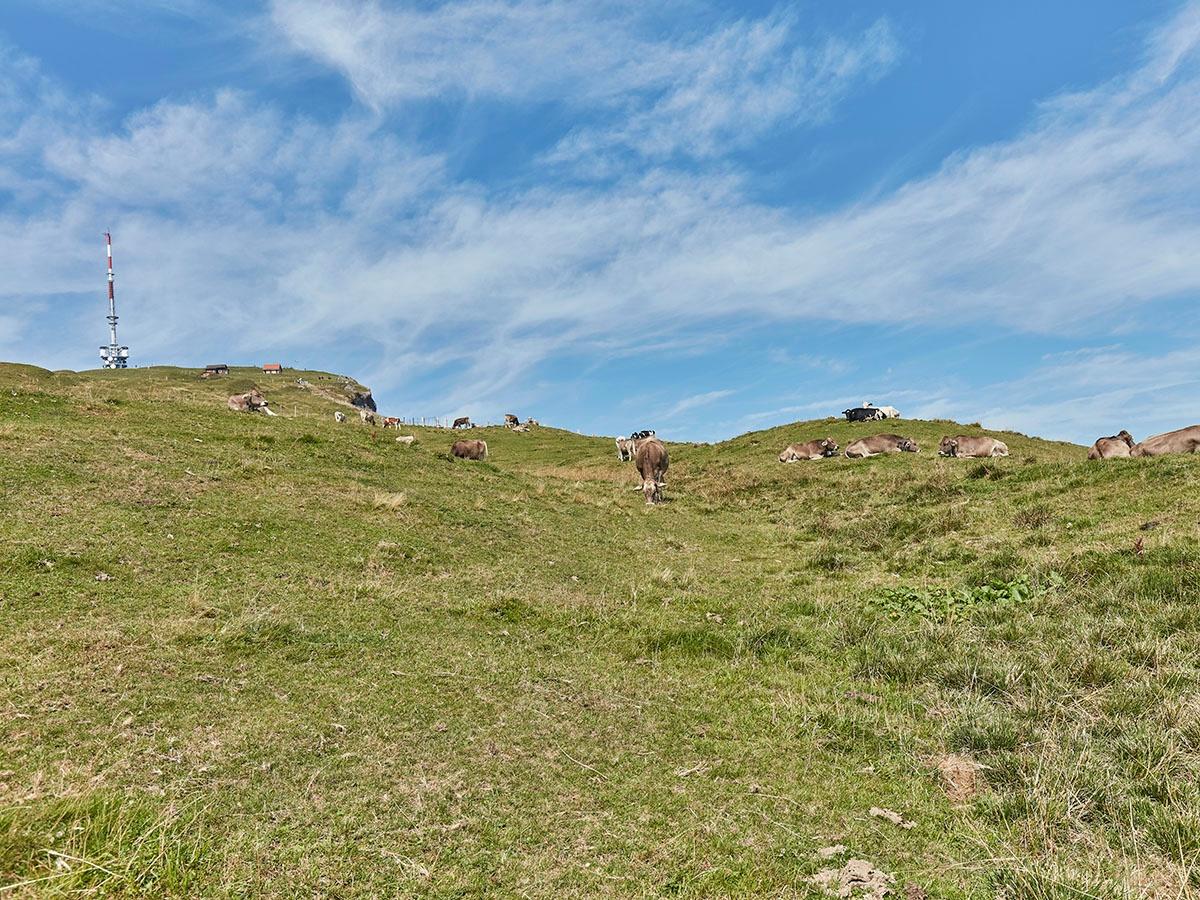 Etappe: Rigi Kaltbad - Staffel - Klösterli | Schwyzer Tal- & Gipfeltour