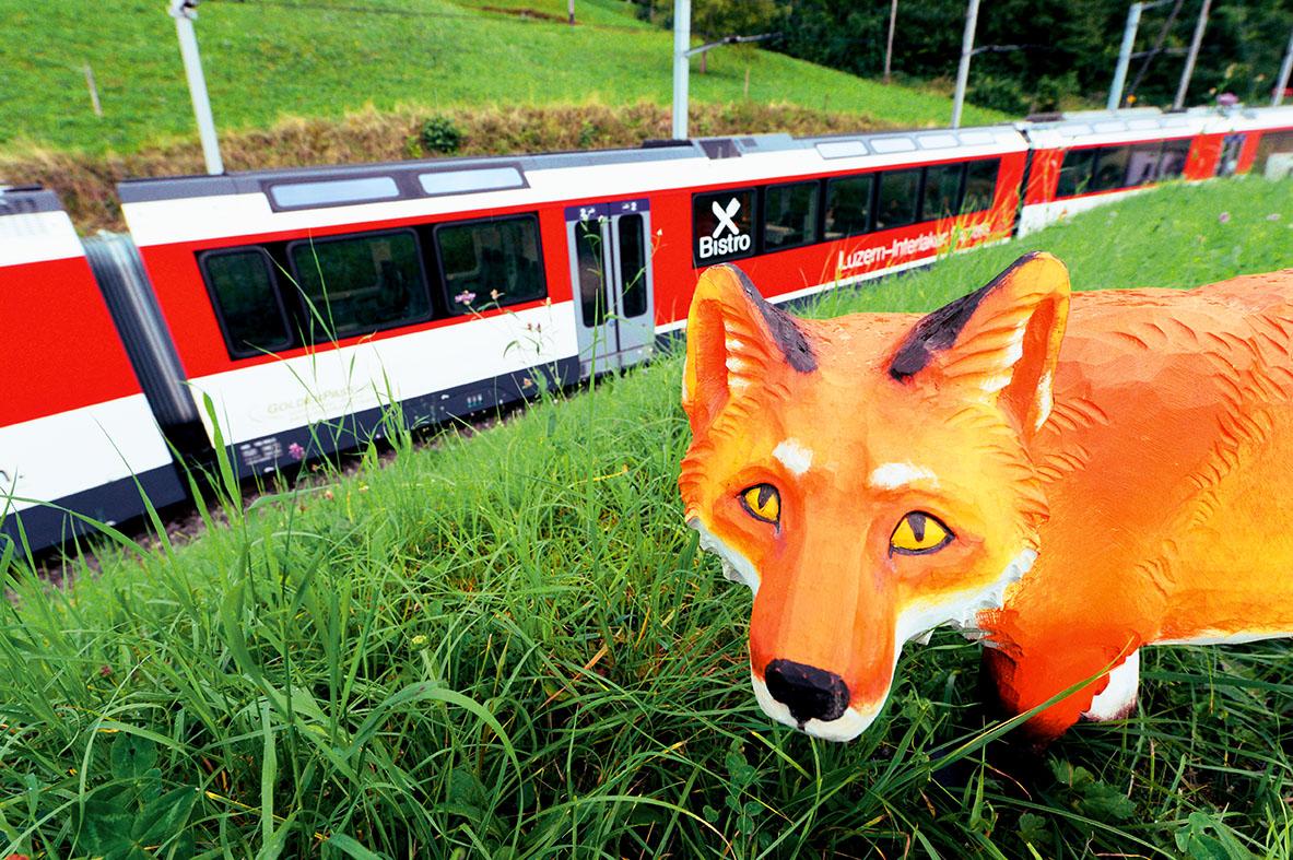 Brünig Safari – a trip on the wild side